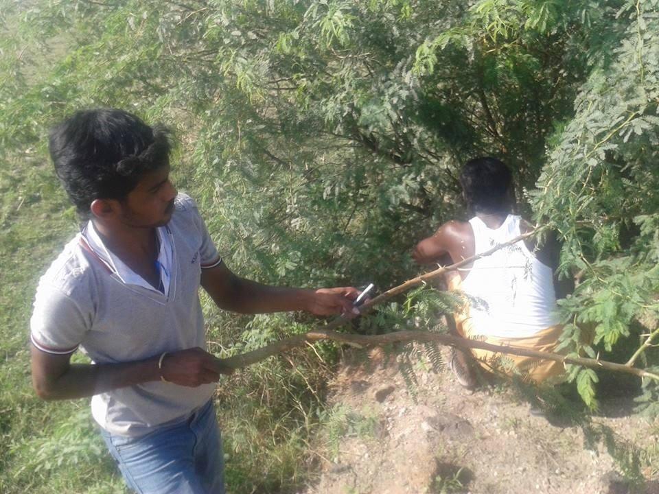 விருதுநகர் மாவட்ட நாம் தமிழர் கட்சியின் சார்பாக சீமைக்கருவேல மரங்களை  அழிக்கிற பணி  நடைபெற்றது. 10698401 1529787597258028 5860283713132616016 n